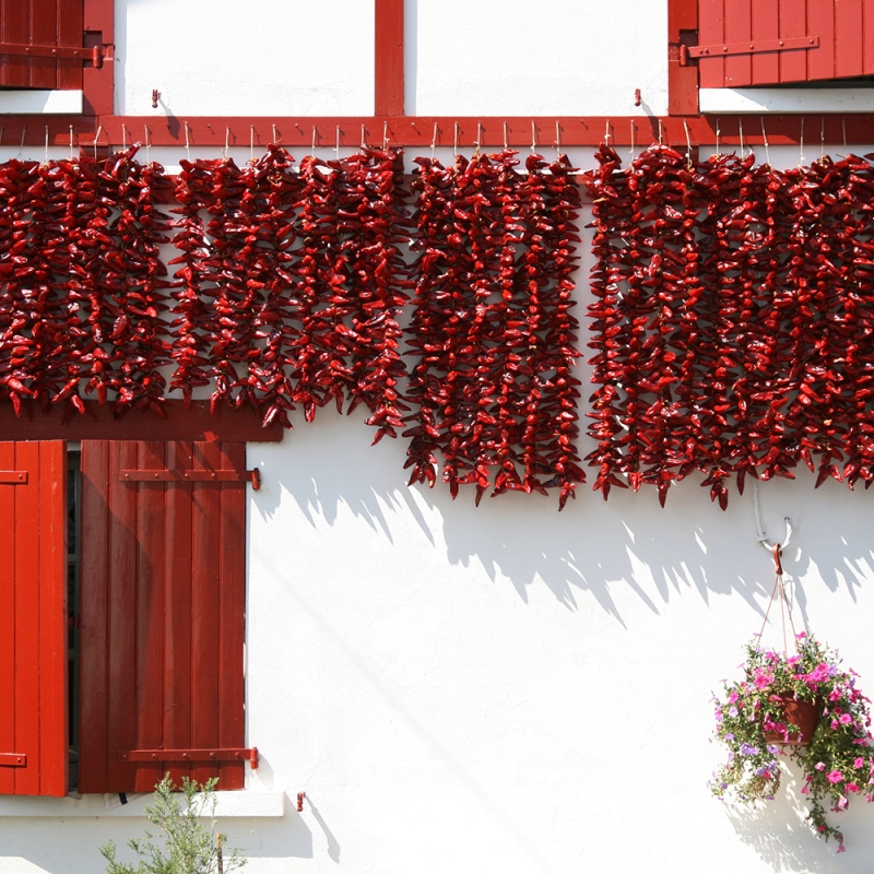 drying peppers bunches